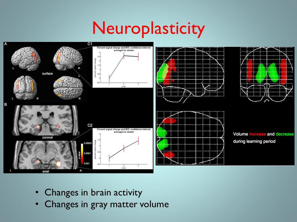 Neuroplasticity Changes in brain activity Changes in gray matter volume