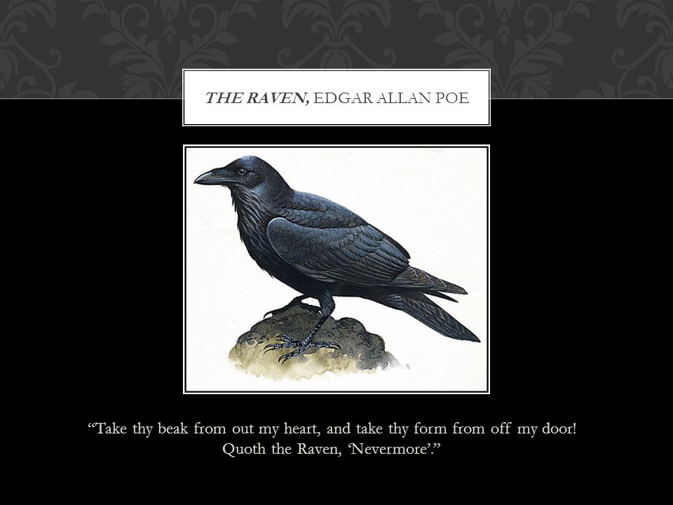 """""""Take thy beak from out my heart, and take thy form from off my door! Quoth the Raven, 'Nevermore'."""" THE RAVEN, EDGAR ALLAN POE"""