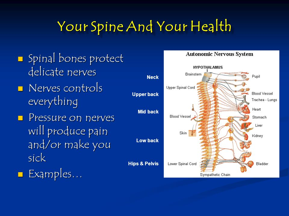 Your Spine And Your Health Spinal bones protect delicate nerves Spinal bones protect delicate nerves Nerves controls everything Nerves controls everything Pressure on nerves will produce pain and/or make you sick Pressure on nerves will produce pain and/or make you sick Examples… Examples… Neck Upper back Mid back Low back Hips & Pelvis