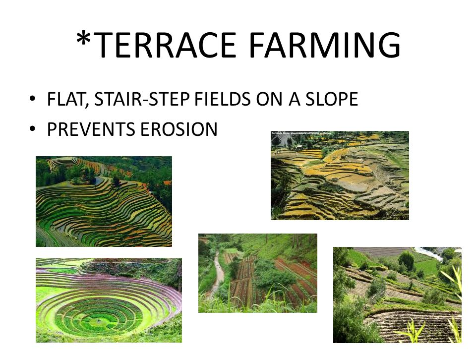 *TERRACE FARMING FLAT, STAIR-STEP FIELDS ON A SLOPE PREVENTS EROSION