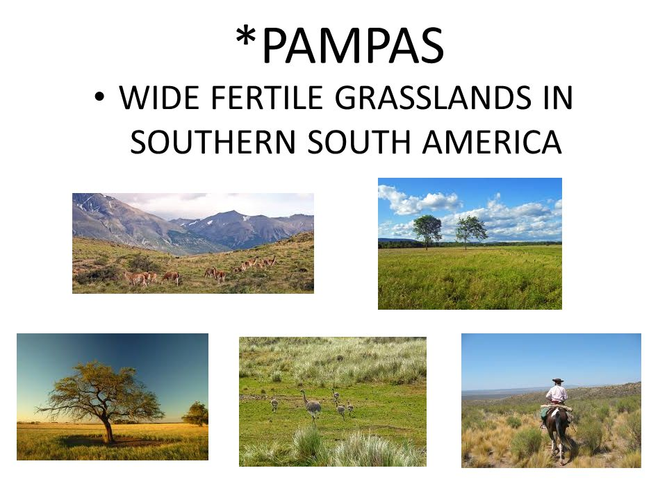*PAMPAS WIDE FERTILE GRASSLANDS IN SOUTHERN SOUTH AMERICA