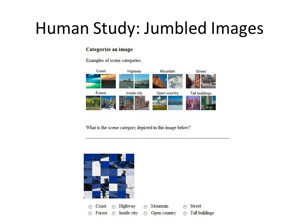 Human Study: Jumbled Images