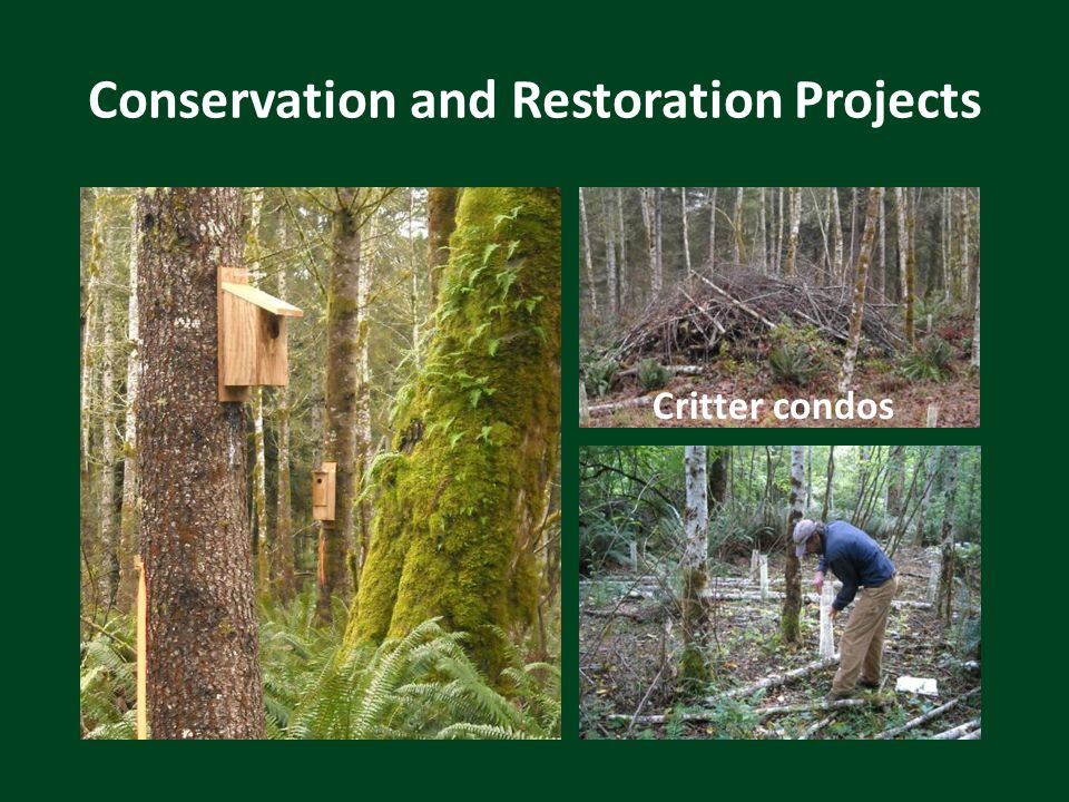 Conservation and Restoration Projects Critter condos