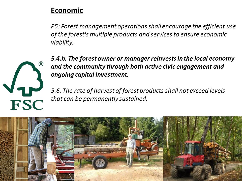 Economic P5: Forest management operations shall encourage the efficient use of the forest s multiple products and services to ensure economic viability.