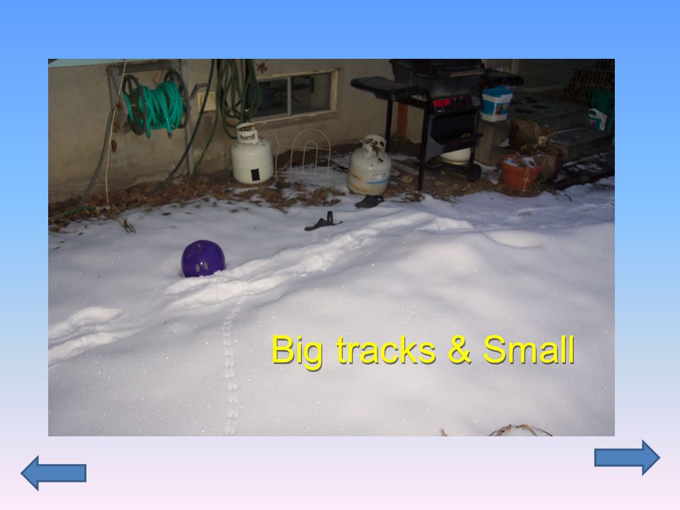 Big tracks & Small