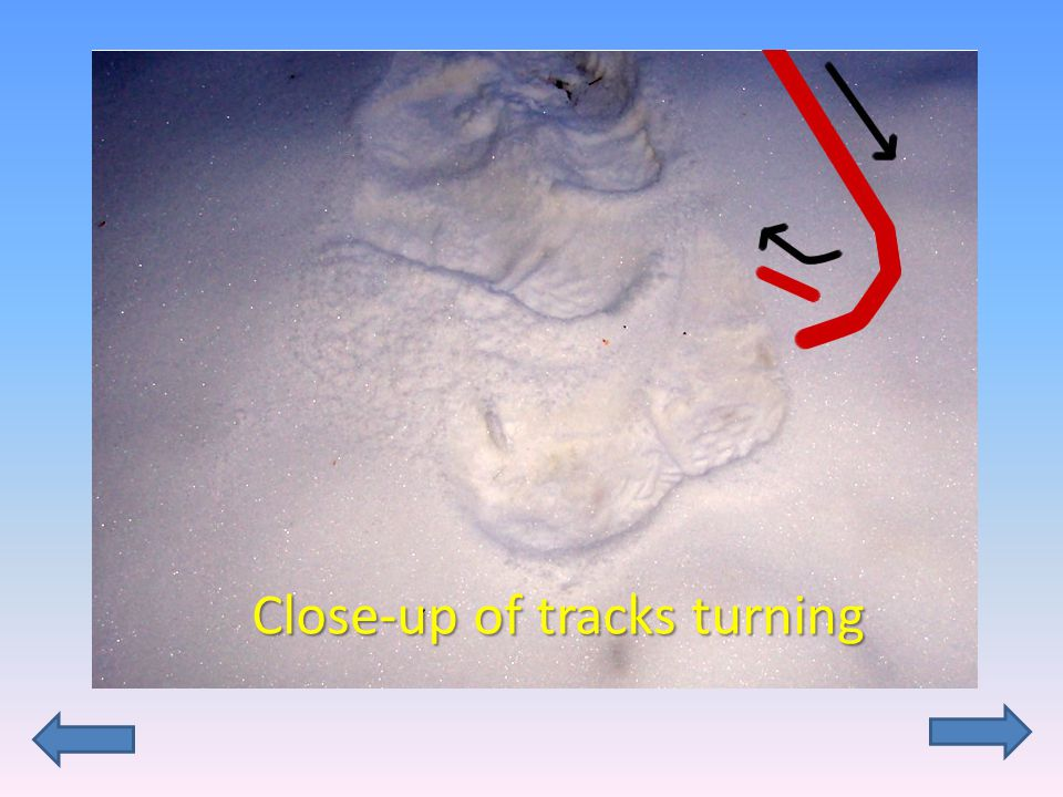 Close-up of tracks turning
