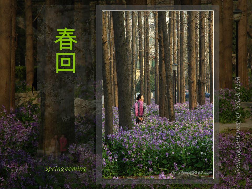 Nanjing University of Sci. & Tech. Spring coming