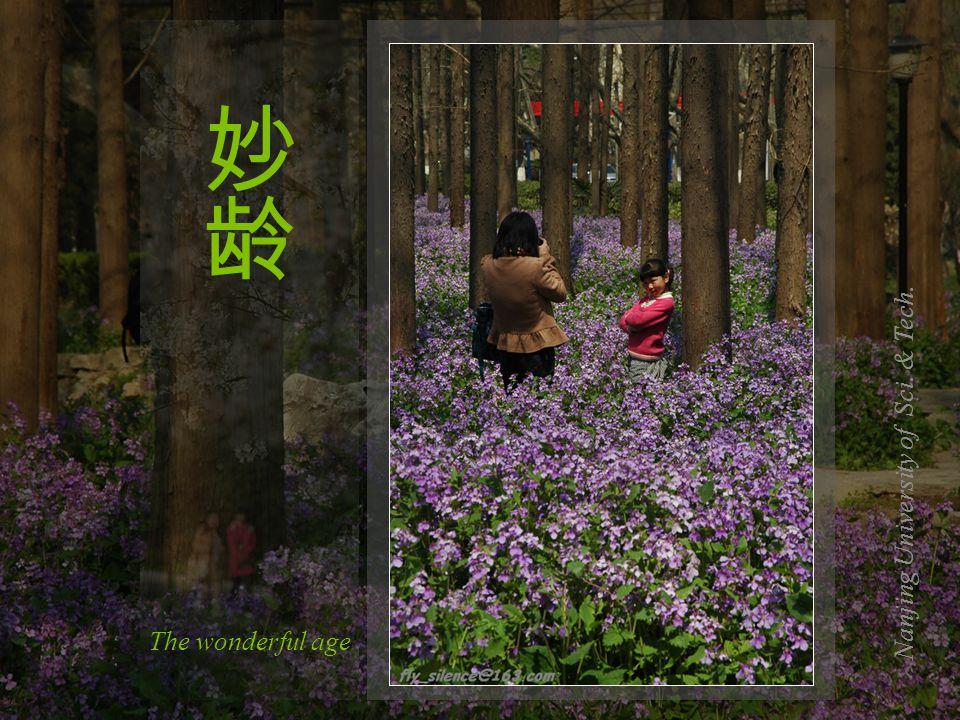 Nanjing Xuanwu Lake In full bloom