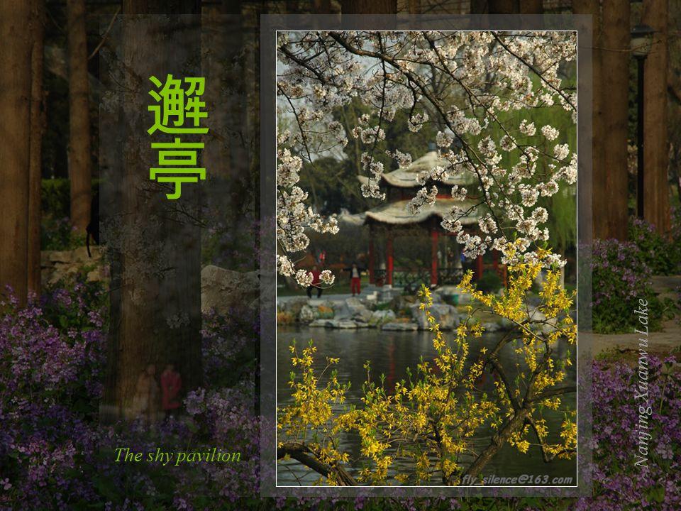 In Love with the boatNanjing Xuanwu Lake