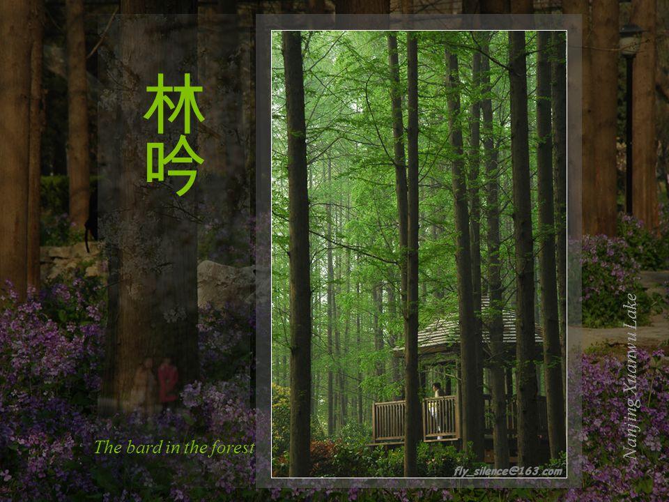 Blooming warmlyNanjing Xuanwu Lake