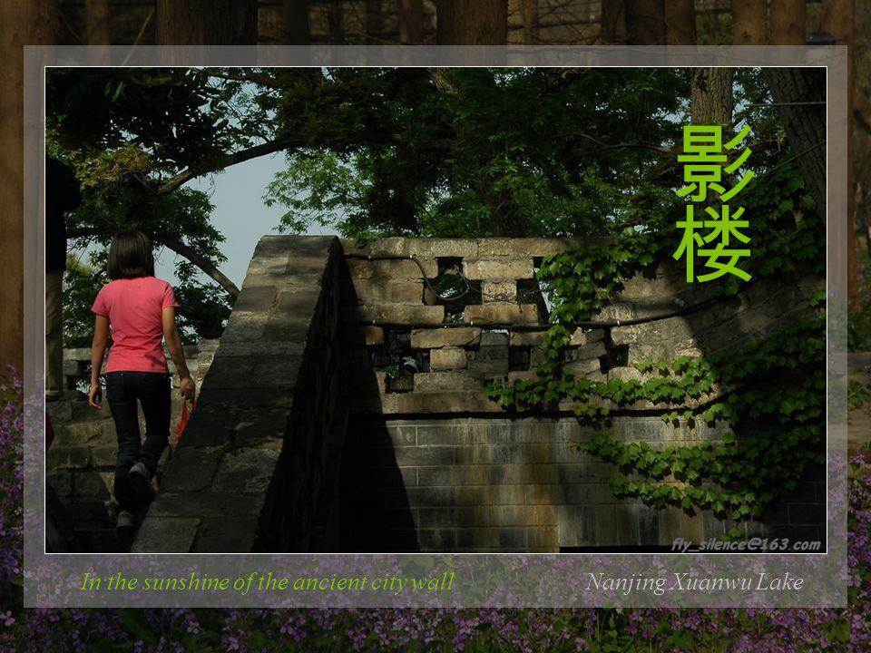 Nanjing Xuanwu Lake The flower umbrella