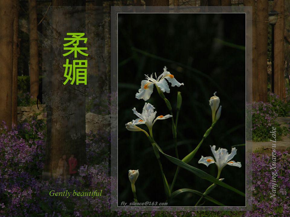 Nanjing Xuanwu Lake The missing leaves