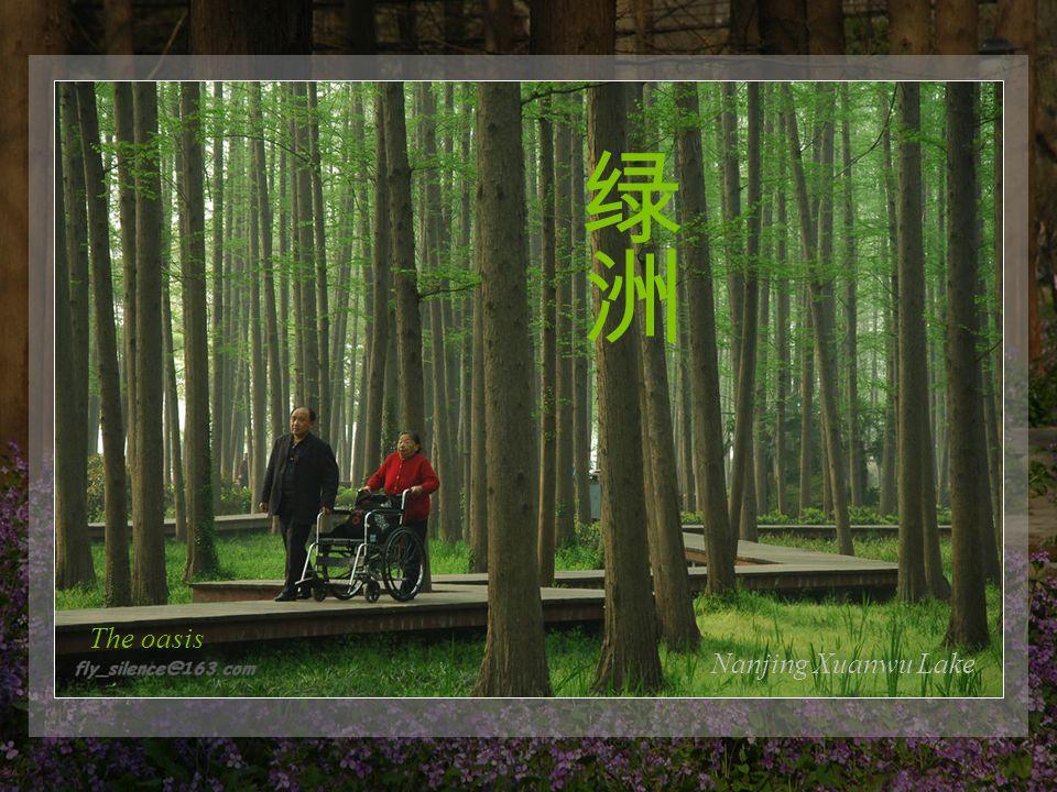 Nanjing lovers garden Meets the beauty