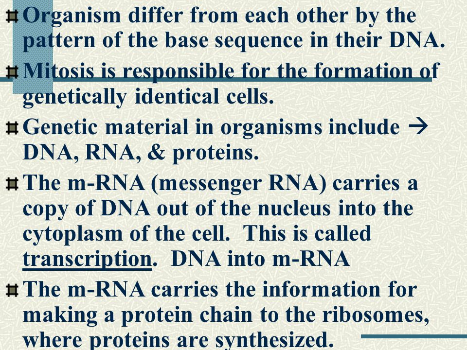 The original DNA gets the new strand from RNA.