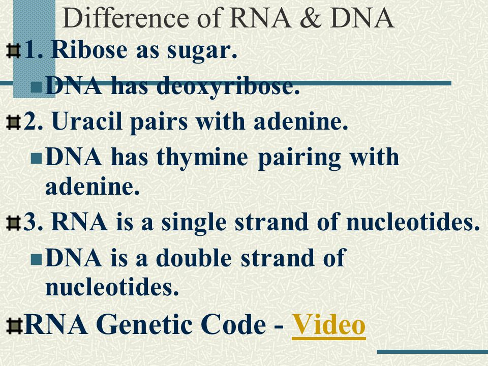 RNA RNA is produced from DNA. 3 types of RNA 1. Messenger RNA (m-RNA) An uncoiled strand.