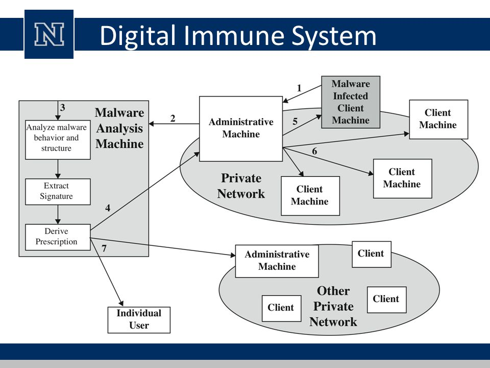 Digital Immune System
