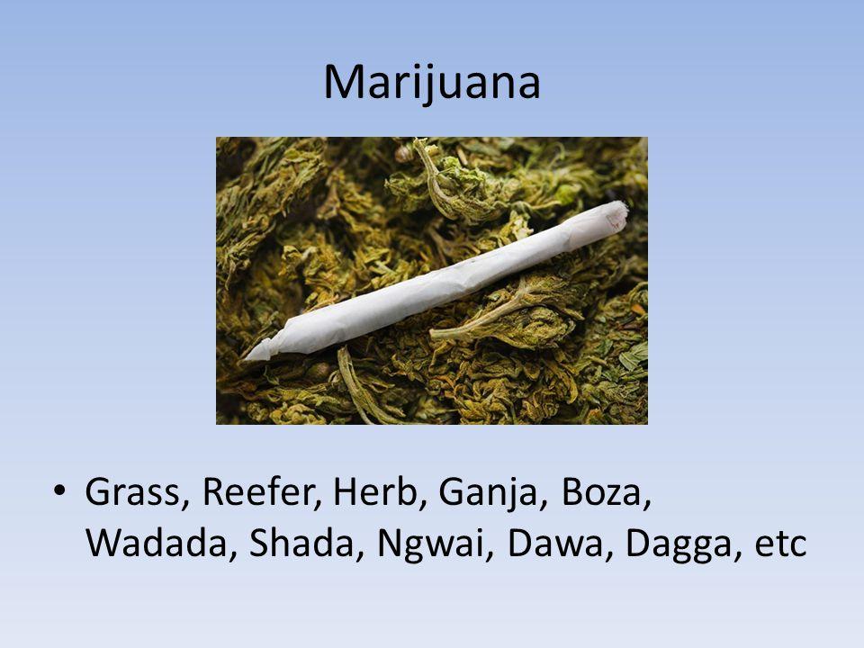 Marijuana Grass, Reefer, Herb, Ganja, Boza, Wadada, Shada, Ngwai, Dawa, Dagga, etc