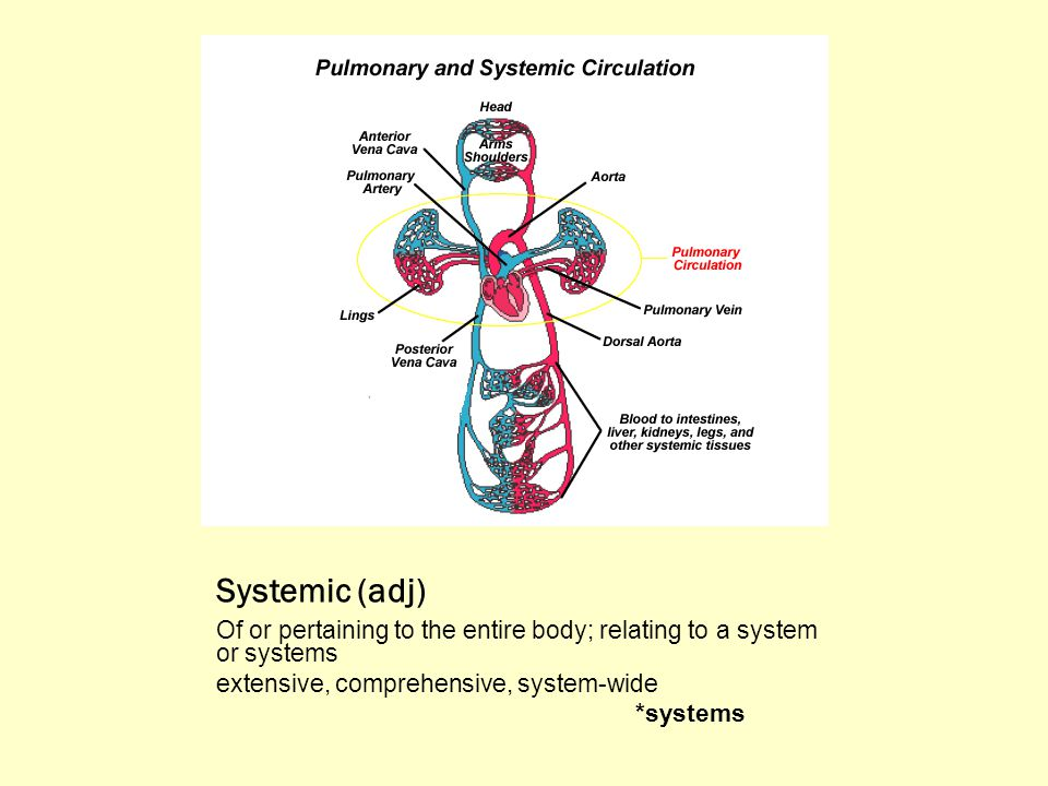 Systemic (adj) Of or pertaining to the entire body; relating to a system or systems extensive, comprehensive, system-wide *systems