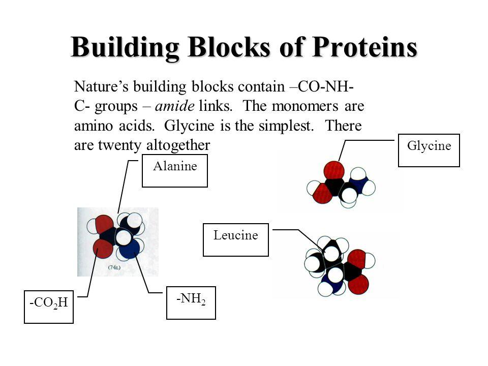 Building Blocks of Proteins Alanine Glycine Leucine Nature's building blocks contain –CO-NH- C- groups – amide links.