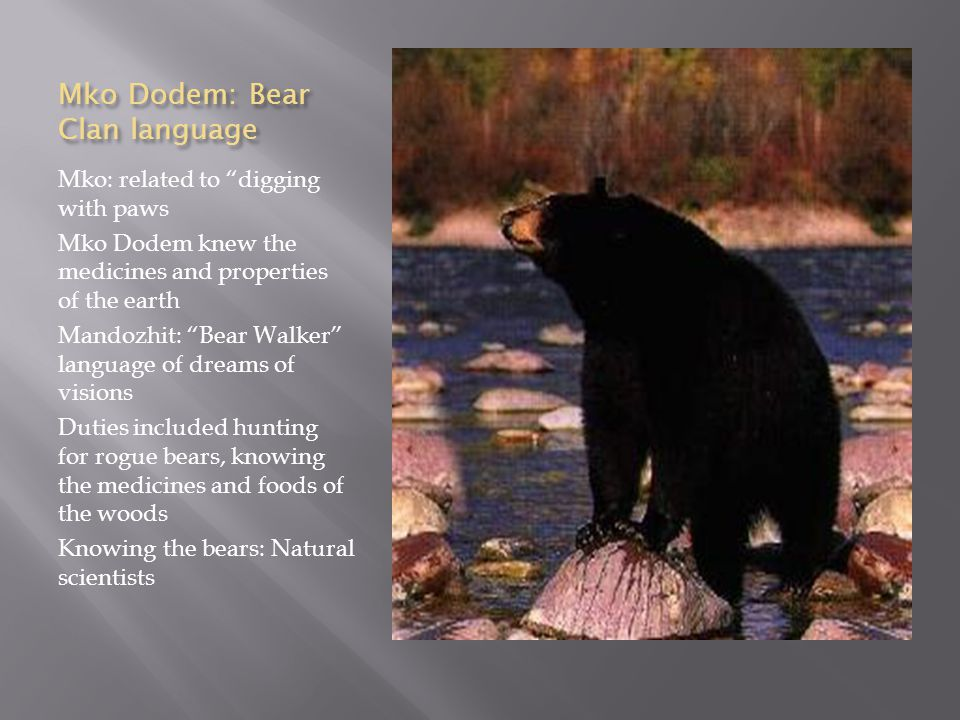 Mko Dodem: Bear Clan language Mko: related to digging with paws Mko Dodem knew the medicines and properties of the earth Mandozhit: Bear Walker language of dreams of visions Duties included hunting for rogue bears, knowing the medicines and foods of the woods Knowing the bears: Natural scientists