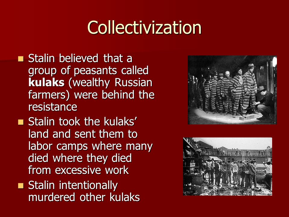 Collectivization Stalin believed that a group of peasants called kulaks (wealthy Russian farmers) were behind the resistance Stalin believed that a gr