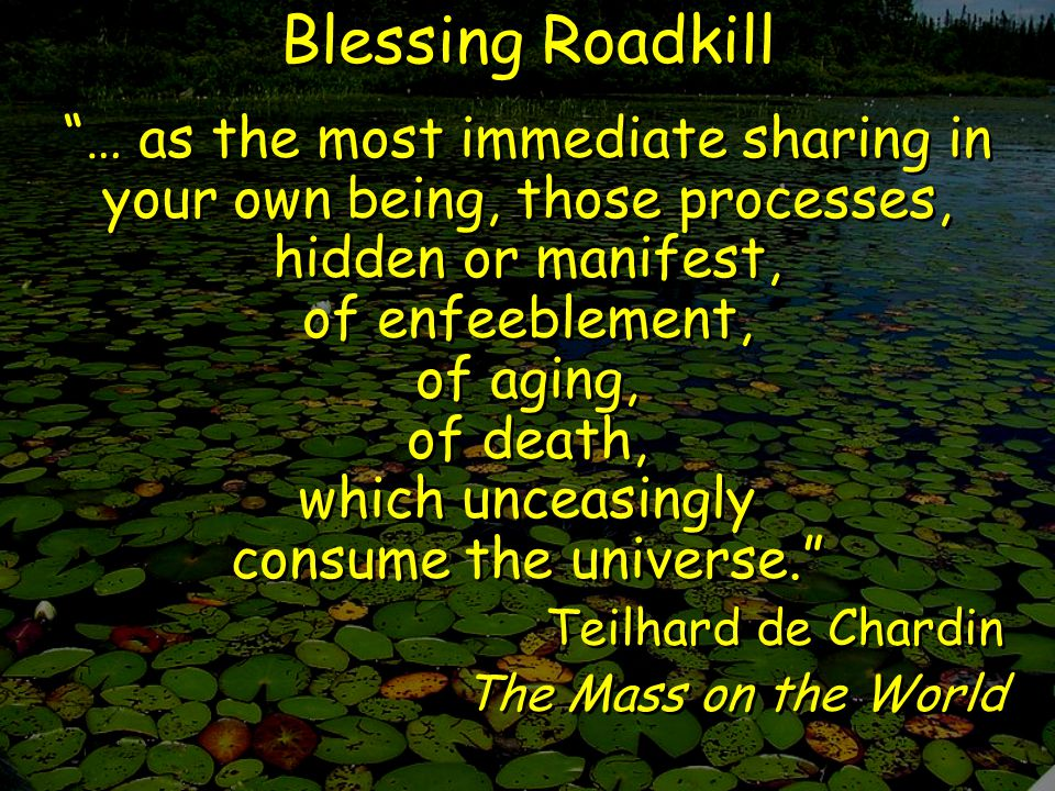 Blessing Roadkill … as the most immediate sharing in your own being, those processes, hidden or manifest, of enfeeblement, of aging, of death, which unceasingly consume the universe. Teilhard de Chardin The Mass on the World … as the most immediate sharing in your own being, those processes, hidden or manifest, of enfeeblement, of aging, of death, which unceasingly consume the universe. Teilhard de Chardin The Mass on the World