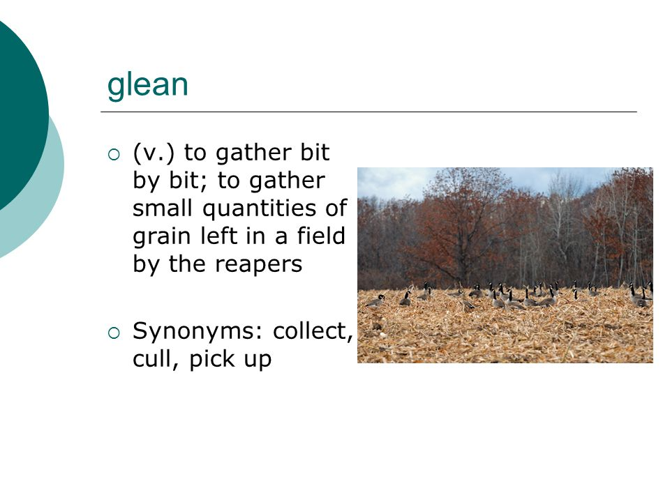 glean  (v.) to gather bit by bit; to gather small quantities of grain left in a field by the reapers  Synonyms: collect, cull, pick up