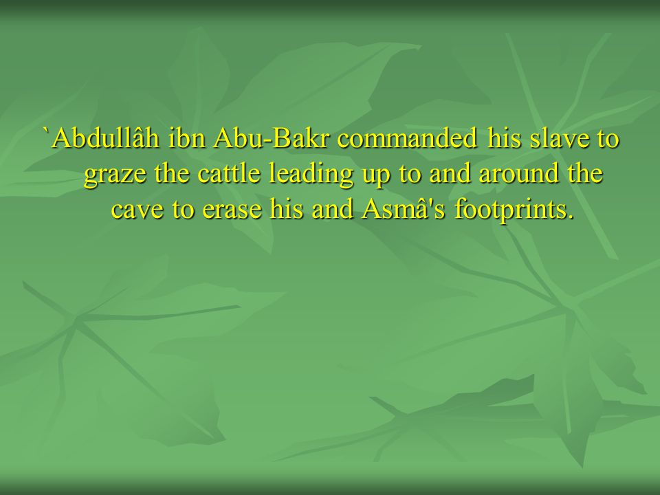 `Abdullâh ibn Abu-Bakr commanded his slave to graze the cattle leading up to and around the cave to erase his and Asmâ's footprints.