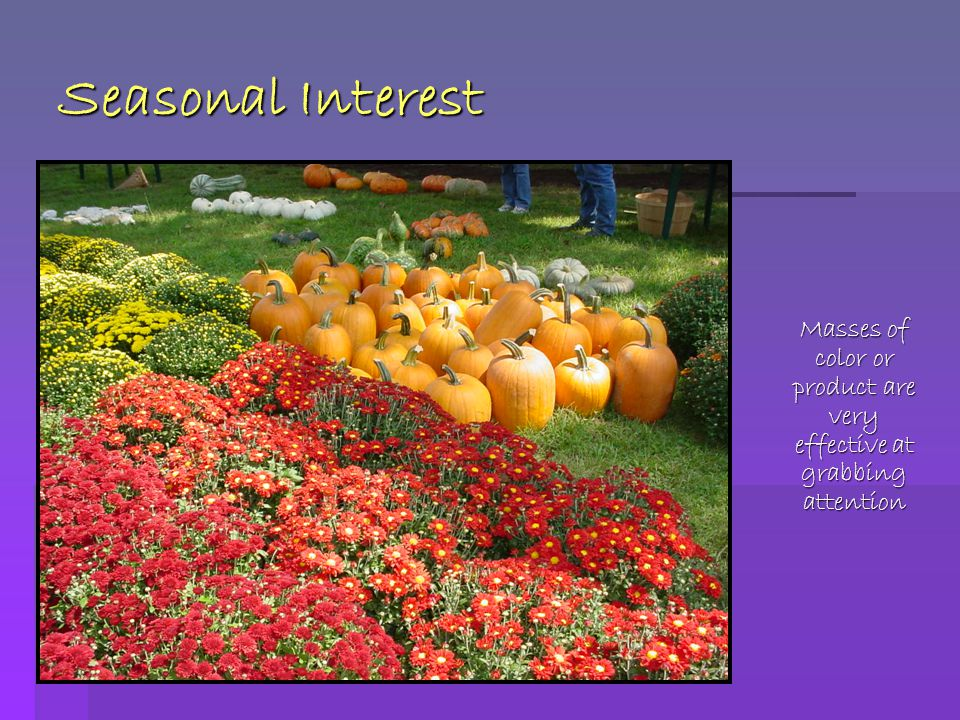 Seasonal Interest Masses of color or product are very effective at grabbing attention