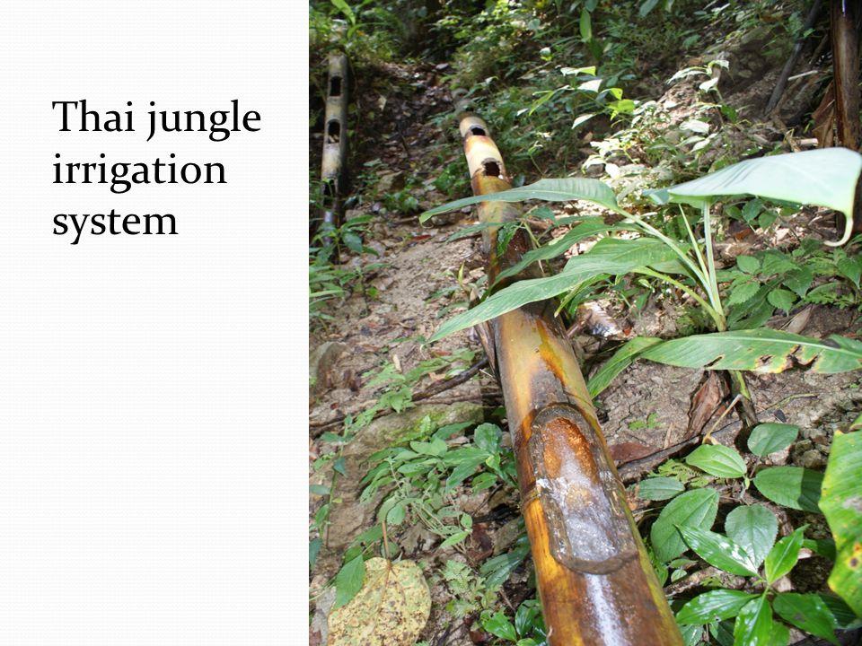 Thai jungle irrigation system