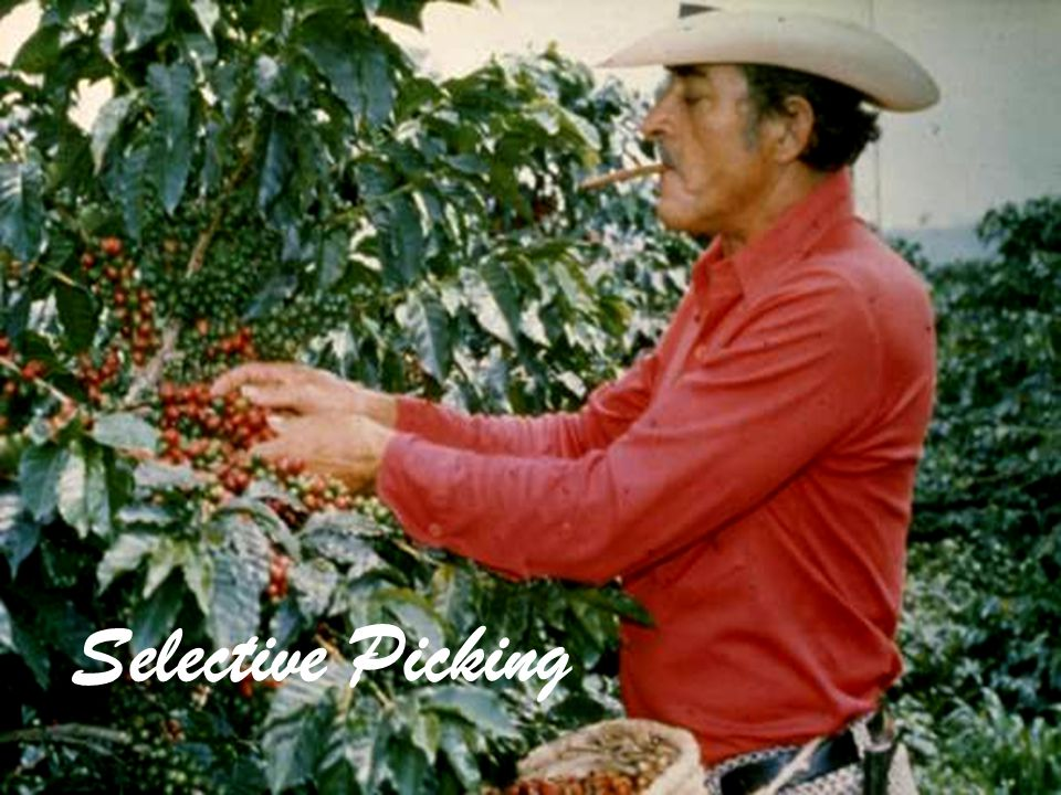 Selective Picking