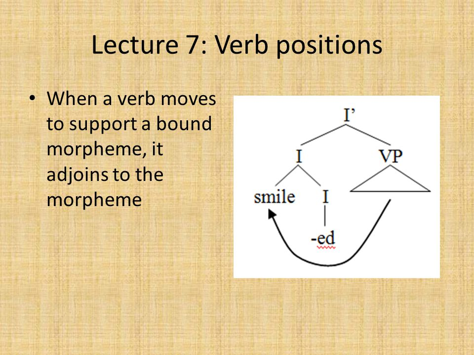 Lecture 7: Verb positions When a verb moves to support a bound morpheme, it adjoins to the morpheme