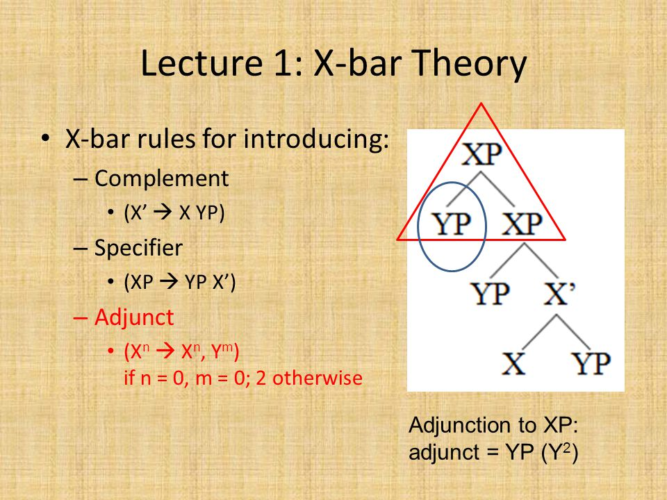 Lecture 1: X-bar Theory X-bar rules for introducing: – Complement (X'  X YP) – Specifier (XP  YP X') – Adjunct (X n  X n, Y m ) if n = 0, m = 0; 2 otherwise Adjunction to XP: adjunct = YP (Y 2 )