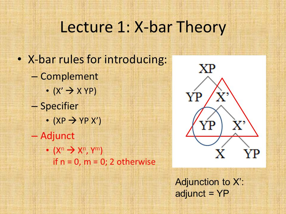 Lecture 1: X-bar Theory X-bar rules for introducing: – Complement (X'  X YP) – Specifier (XP  YP X') – Adjunct (X n  X n, Y m ) if n = 0, m = 0; 2 otherwise Adjunction to X': adjunct = YP