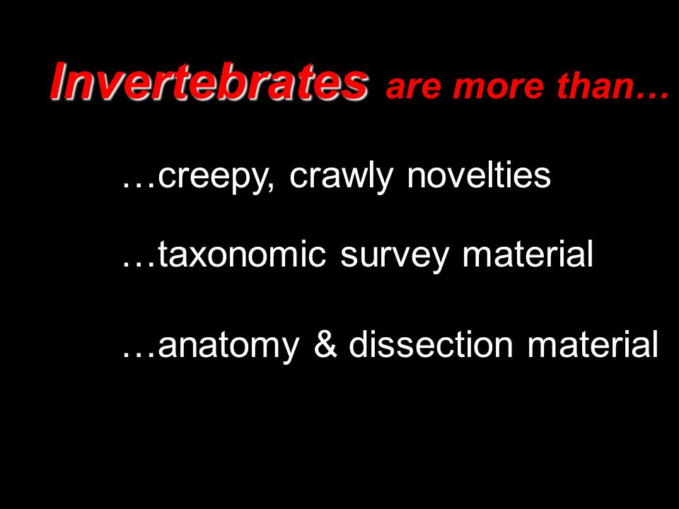 Invertebrates Invertebrates are more than… …taxonomic survey material …anatomy & dissection material …creepy, crawly novelties