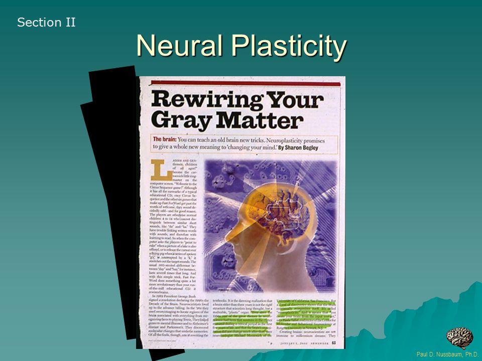 Neural Plasticity Section II Paul D. Nussbaum, Ph.D.