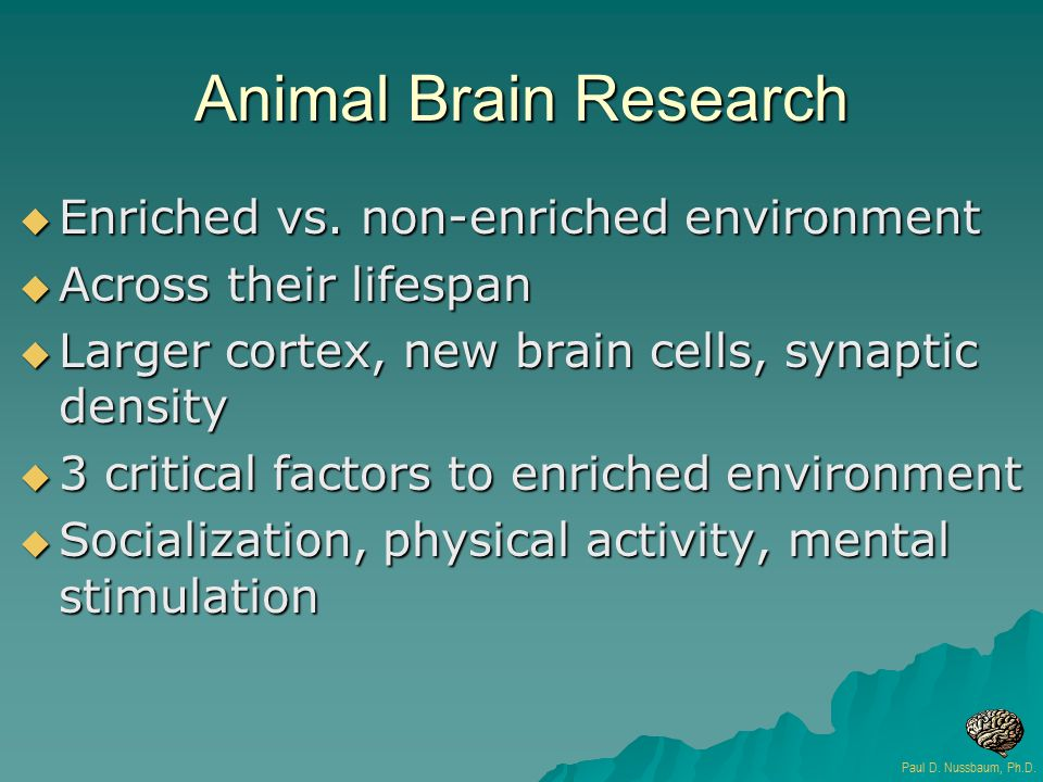 Animal Brain Research  Enriched vs. non-enriched environment  Across their lifespan  Larger cortex, new brain cells, synaptic density  3 critical