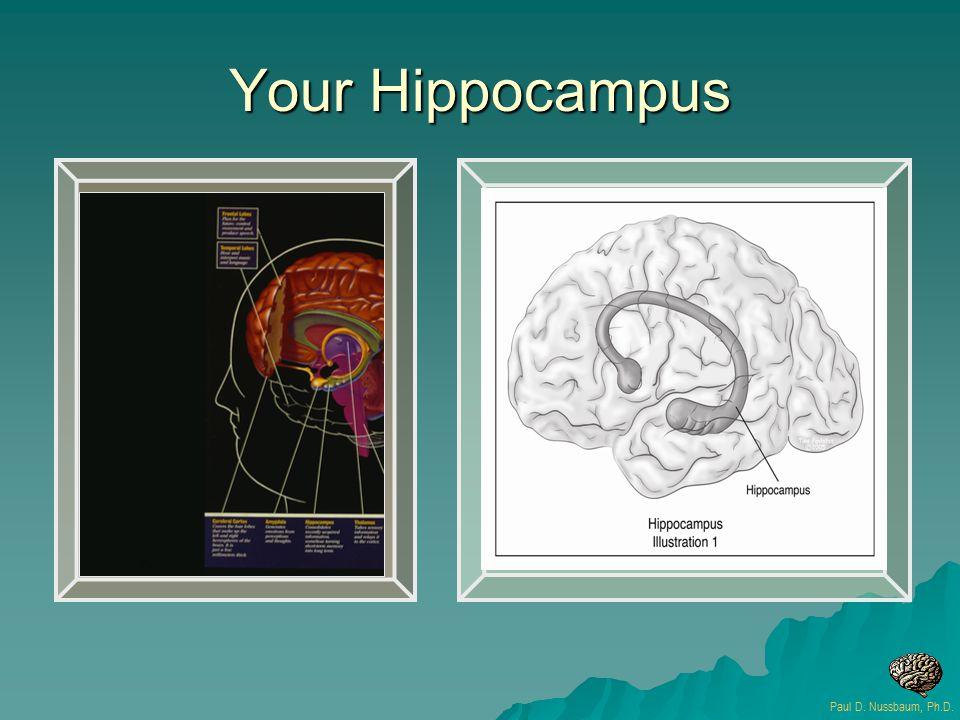 Your Hippocampus Paul D. Nussbaum, Ph.D.