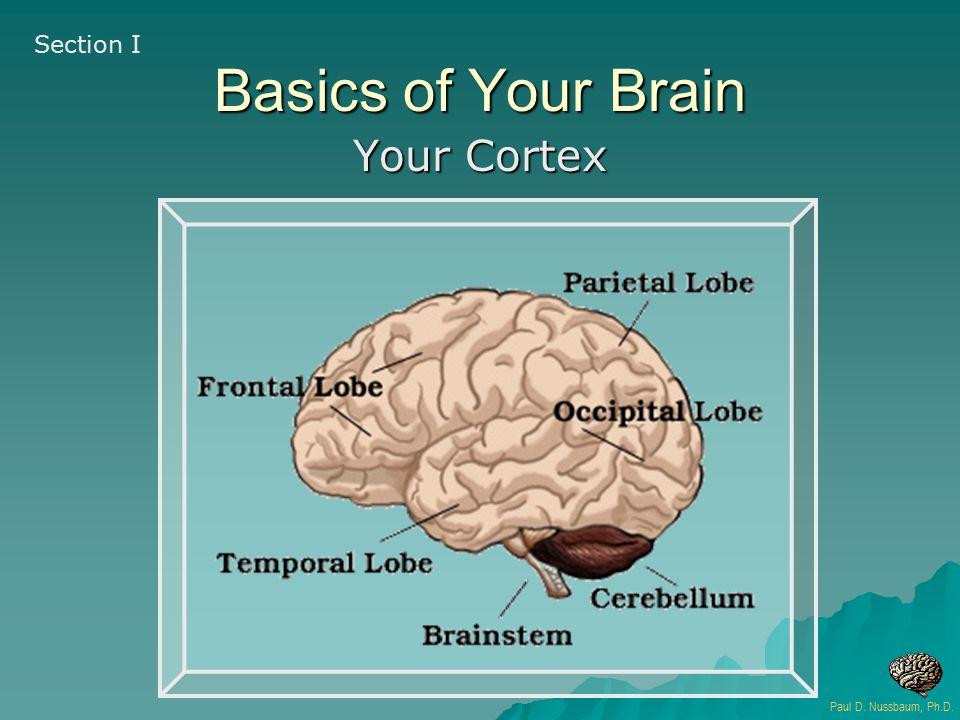 Basics of Your Brain Your Cortex Section I Paul D. Nussbaum, Ph.D.