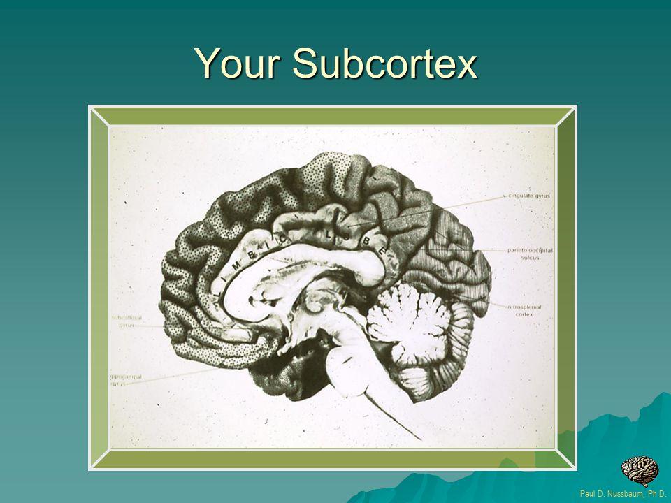 Your Subcortex Paul D. Nussbaum, Ph.D.