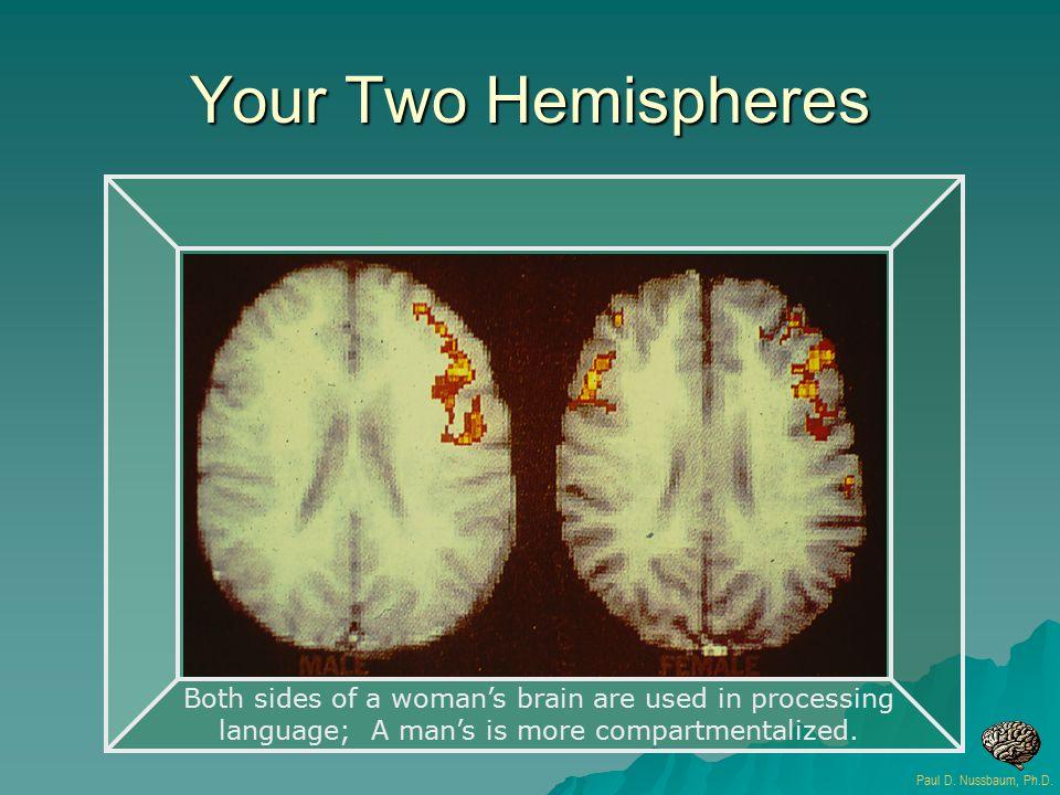 Your Two Hemispheres Paul D. Nussbaum, Ph.D.
