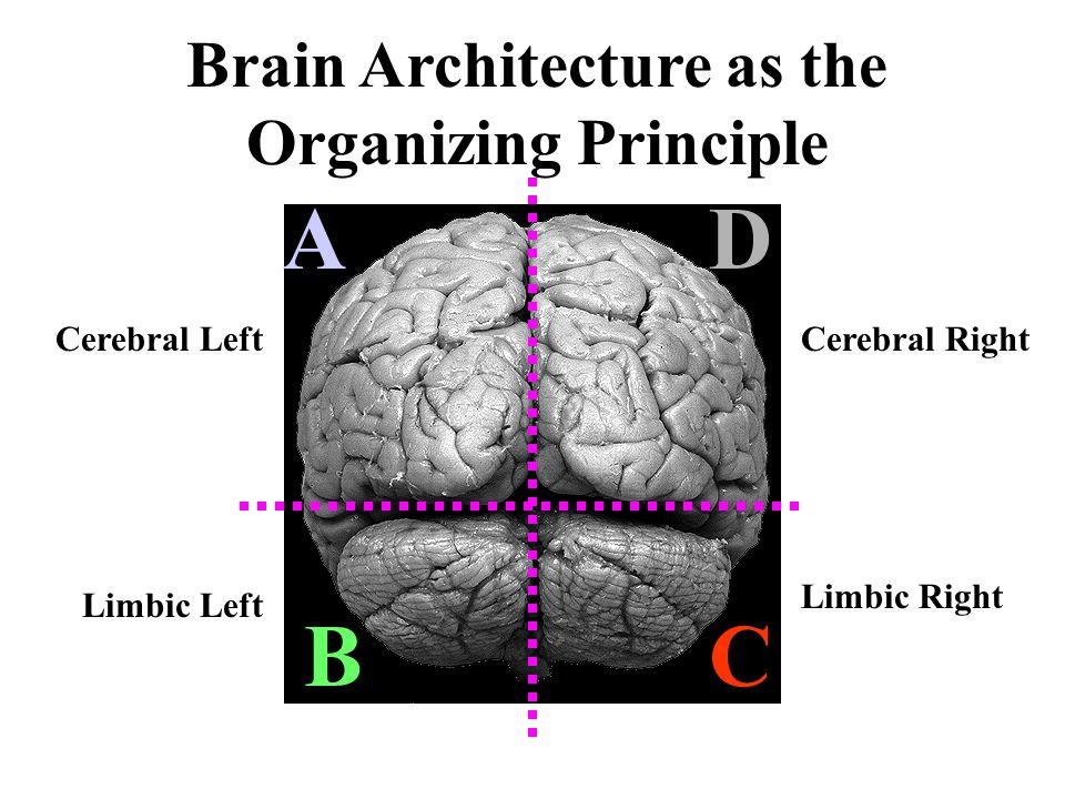 Brain Architecture as the Organizing Principle AD CB Cerebral LeftCerebral Right Limbic Right Limbic Left