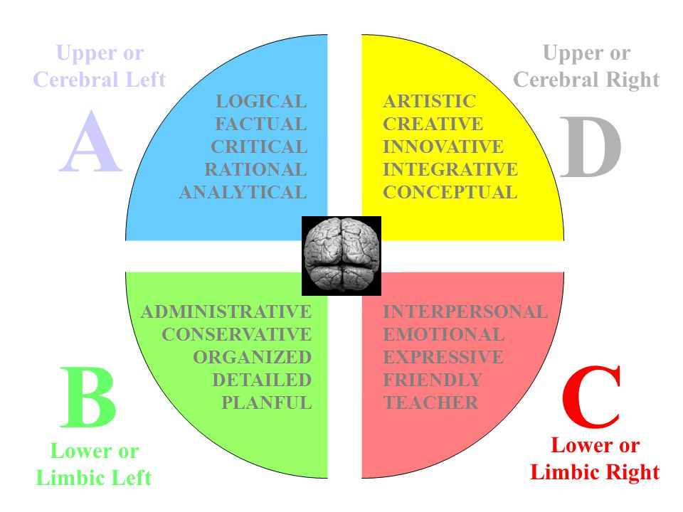 A BC D LOGICAL FACTUAL CRITICAL RATIONAL ANALYTICAL INTERPERSONAL EMOTIONAL EXPRESSIVE FRIENDLY TEACHER ARTISTIC CREATIVE INNOVATIVE INTEGRATIVE CONCEPTUAL ADMINISTRATIVE CONSERVATIVE ORGANIZED DETAILED PLANFUL Upper or Cerebral Left Lower or Limbic Left Upper or Cerebral Right Lower or Limbic Right