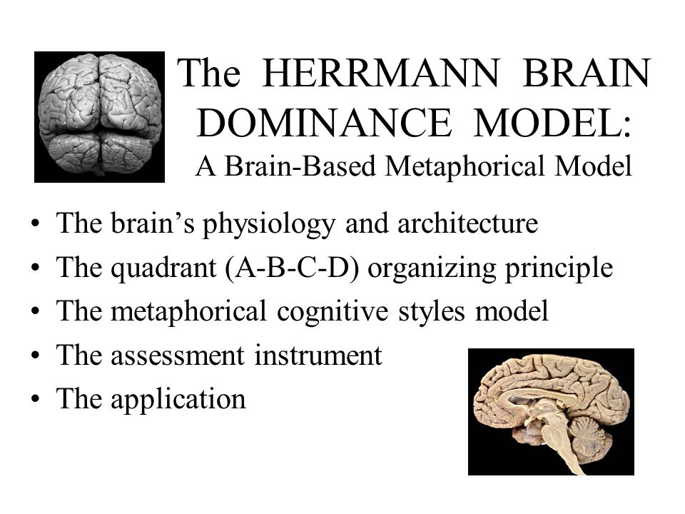 The HERRMANN BRAIN DOMINANCE MODEL: A Brain-Based Metaphorical Model The brain's physiology and architecture The quadrant (A-B-C-D) organizing principle The metaphorical cognitive styles model The assessment instrument The application