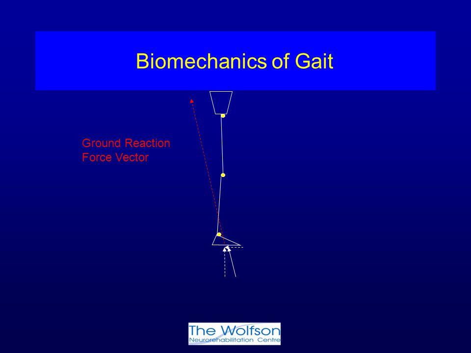 Biomechanics of Gait Ground Reaction Force Vector