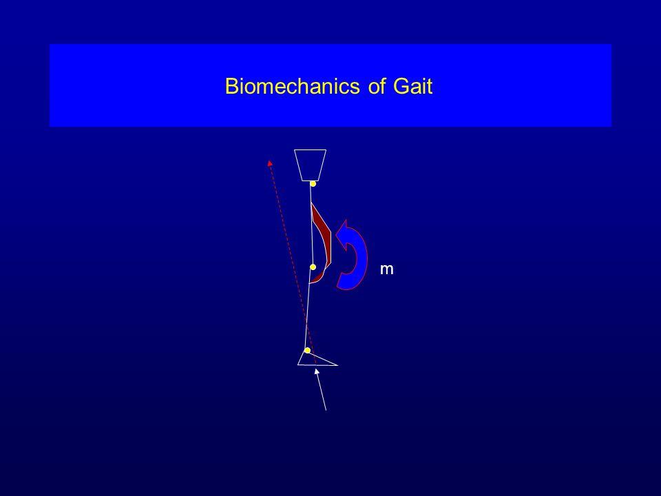 Biomechanics of Gait m