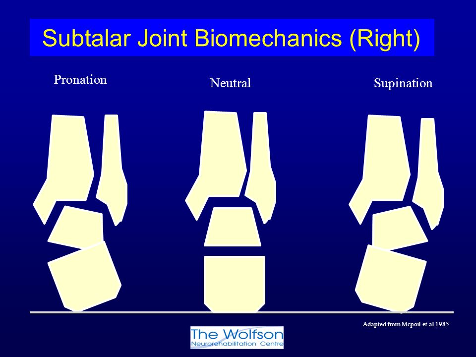 Pronation Supination Subtalar Joint Biomechanics (Right) Neutral Adapted from Mcpoil et al 1985