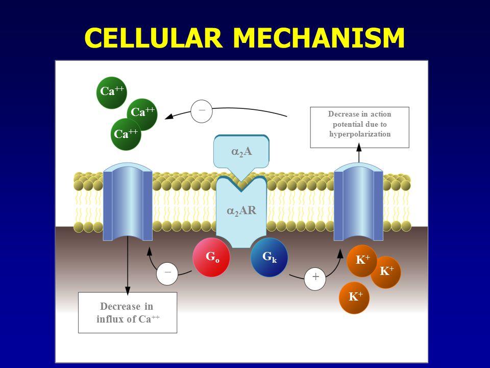 CELLULAR MECHANISM Ca ++ – – + Decrease in influx of Ca ++ Decrease in action potential due to hyperpolarization 2A2A  2 AR GoGo GkGk K+K+ K+K+ K+K+