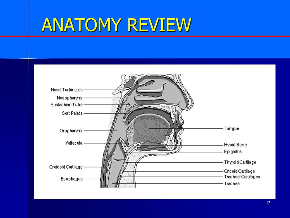 12 ANATOMY REVIEW