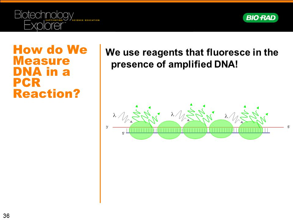 36 How do We Measure DNA in a PCR Reaction? We use reagents that fluoresce in the presence of amplified DNA! 5' 3' 5'